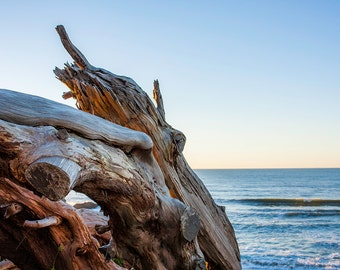 Driftwood At Sunset - Fine Art Print - 8x10 11x16, Landscape Photograph