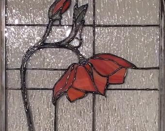 Orange Poppy (flower 001)