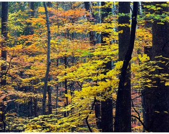 SMOKY MOUNTAIN COLORS, Autumn colors, Smoky Mountains, Landscape, Panoramic Image, Fall Colors