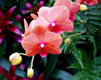 Orchids In Sarasota