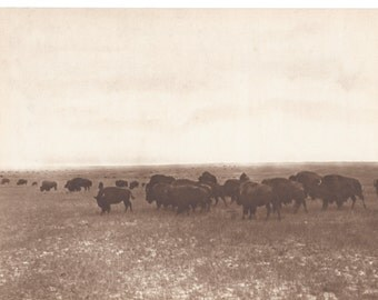 L.A. Huffman - Bison Herd