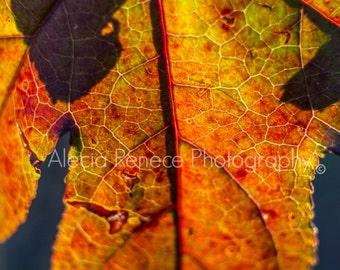 "Print ""Autumn"""