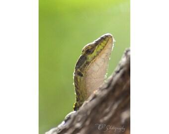 Lizard photography print close up - macro photography nature animal wall photo decoration nursery boy green fun 5x7 8x12 12x18 16x24