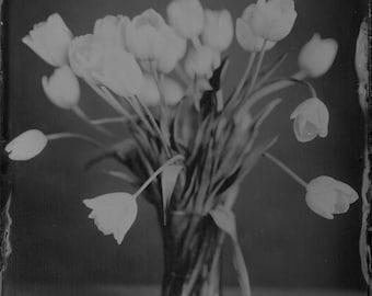 Tulips  5x7 Wet Plate Tintype