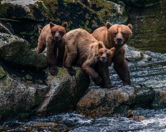 Bear's Hunting