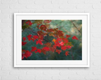 Autumn Red Leaf Art Photo With Frame