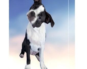 Boston Terrier Puppy Dog Canvas
