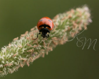 Lady Bug Fine Art Print