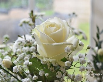 Rose photograph - flower photograph - A2 photograph - A3 photograph - creative photograph
