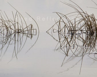 Reed Reflections #15