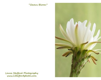 Cereus Bloom Notecard