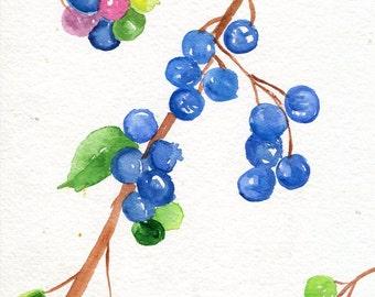 Blueberries Watercolors Paintings  original ART, 5 x 7, Fruit watercolor, original watercolor painting of blueberries, kitchen decor