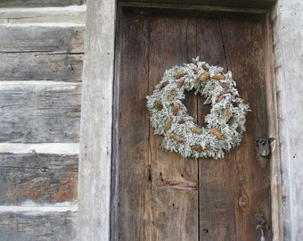 dried DUSTY MILLER WREATH    natural  decoration  for door or wall