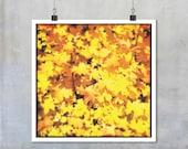 Autumn Fall Nature Photography - yellow autumn fall leaves square wall art home decor print art autumnal colour field 7x7 12x12 15x15 18x18