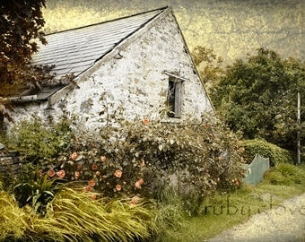 Peach Roses, Irish Road, White Washed Cottage, Irish Decor, Ireland Landscape, Irish Photo, Old White House, English Rose Garden, Celtic Art