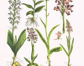 Botanical Illustration Print.Floral.RARE.Botanic,Vintage.Antique.Genuine.1929.French.Art.Classy.Mom.Dad.Plant.pretty picture.eco.flower.boho
