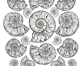 All Ages Coloring Art Print Ammonites Fossil Design 11x17 Poster Art For You To Color with FREE Markers