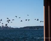 Photography / Vogelflug //  instant download / jpg file / home decor / wall art / Burrard Inlet / Vancouver
