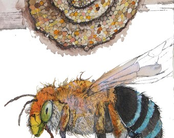 Native Australian bee
