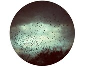Fall Photo, Bird Photograph, Sky, Clouds, Trees, Black, Grey, Circle, Round Image -8x8 inch Fine Art Photography Print - Depar