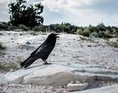 Wasteland Raven Photo, Bird Photography, Crow, Arizona Desert Print, Nature Photograph, Gothic Decor, Petrified Forest, Badlands