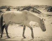 Wild horse photograph . black and white photography . Cumberland Island . equine print . beach photograph . animal print . travel photo