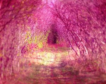 Red riding hood, pink print, dreamy, fine art photo, nursery decor, pink flambe, trees, baby girl, Alice in Wonderland fairytale