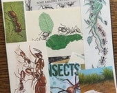 Army Ant Invasion Vintage Insect Collage, Scrapbook and Planner Kit Number 1954