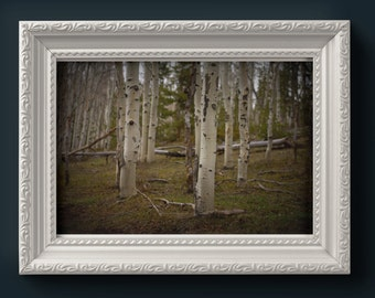quaking aspens | digital download