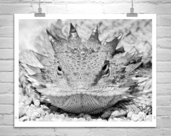 Horned Lizard, Horny Toad, Reptile Art, Desert Wildlife, Nature Photography, Horned Toad, Lizard Picture, Black and White