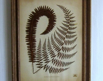 Vintage Botanic Fern Print from the New York Botanic Gardens