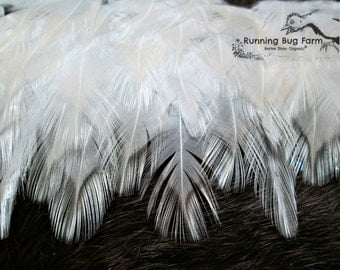 "White Chicken Feathers Natural Cruelty Free Real Bird Feathers White Wyandotte Rooster Feathers Feathers For Crafts 30 @ 1.5 - 2.5"" / WW9"