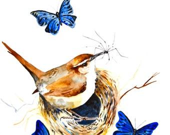 "Wren and Spider, Watercolor Painting, Original Art, 11""x15"""