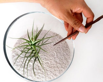 Air Plant Large Zen Garden (Discounted)