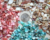 Abalone-Mini Bits of polished crushed shells for terrariums-4 variations-Vivariums-Weddings-Craft Projects and More 1/3 cup