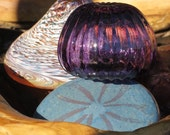 Glass Sand Dollar & Shell...