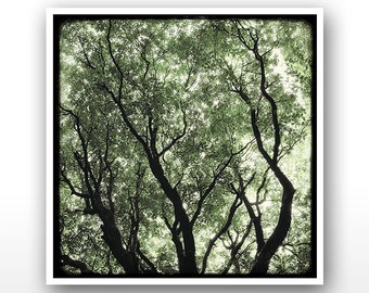 """Deluxe Signed 8""""x8"""" Print - Les Arbres Verts"""