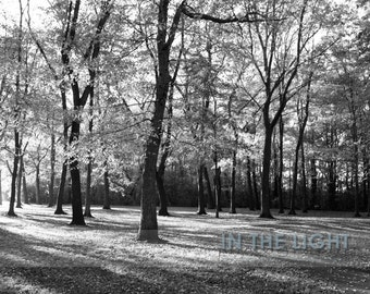 Fall Trees in Black and White or Color - Fine Art Photography