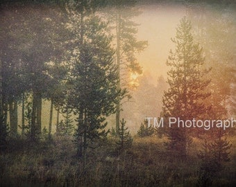 Sunrise in the Rockies - Rocky Mountain National Park - Forest at Sunrise - Rocky Mountains - Fine Art Photography