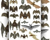Bats, Illustrations, Scrapbook, Collage Papers, Halloween Download and Print, Vintage Natural History Scans