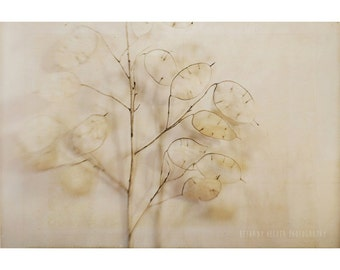 Lunaria, 8x12 Print, Nature Photography, Botanical Print, Nature Still Life, Money Plant, Rustic Home Decor, Neutral Wall Art, Minimalist