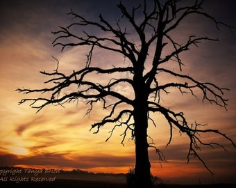 Sarah's Tree, Haunted, Eerie, Sunrise, Tree Photograph, Oak Tree, Silhouette, Modern Gothic, Modern Wall Art, Foggy, Landscape