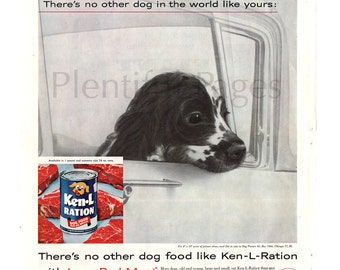 1960 Ken-L-Ration Vintage Ad, 1960's Dog Food, Advertising Art, Canned Dog Food, Spaniel Puppy, Great for Framing or Collage.