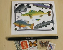 Fish Specimen Collage Notecards - Boxed Set of 4