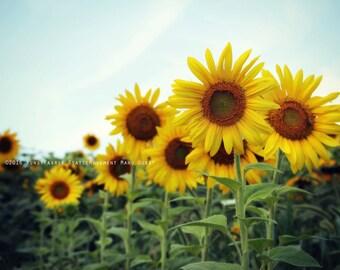 SUMMER'S DREAM Original Color Fine Art Nature Blossom Flower Photograph