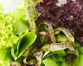 Cubits Baby Leaf Heirloom Lettuce Mix Greens Salad Seeds
