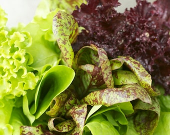 Cubits Baby Leaf Heirloom Lettuce Mix Greens Salad Seeds