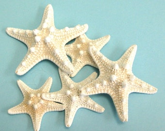 """Starfish - 10 Knobby Starfish -  3"""" - 4"""" bulk shells bulk starfish beach weddings beach decor"""