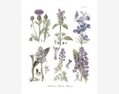 Botanical Print of Meadowland Flowers in Soft Lavender and Blue Hues Adapted from Vintage Illustrations - Pate V
