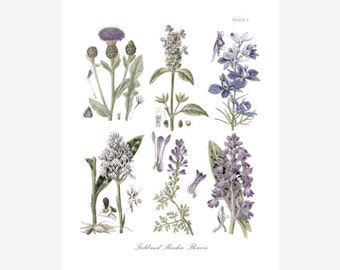 Botanical Print of Meadowland Flowers in Soft Lavender and Blue Hues Adapted from Vintage Illustrations - Plate V